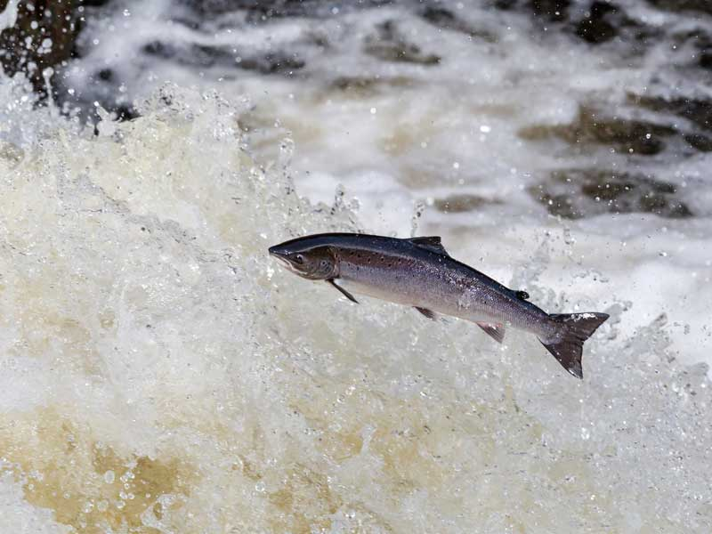 10 Ways You Can Help Save Wild Salmon